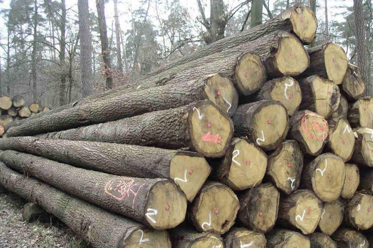 Vùng sinh thái và khu vực phân bổ của cây gỗ Chò Chỉ