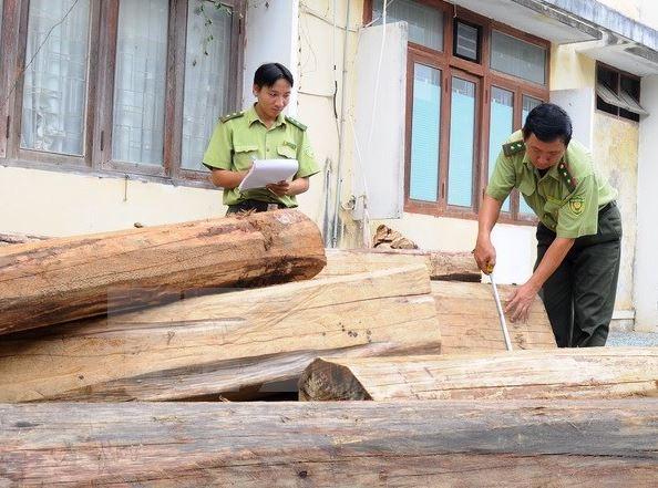 Vụ bắt vận chuyển gỗ trắc trái phép