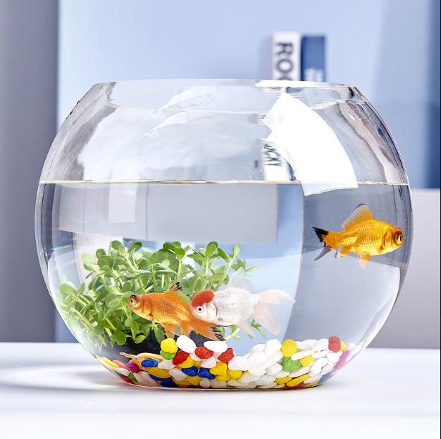 Hướng dẫn cách bố trí bể cá cảnh trong nhà
