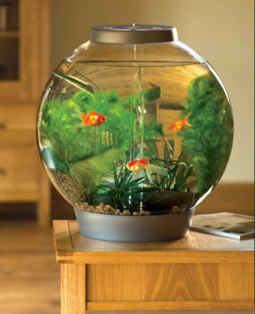 Những lưu ý khi đặt bể cá trong nhà