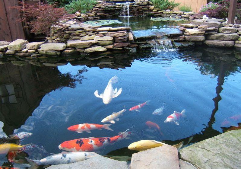 Biệt thự sân vườn thiết kế tiểu cảnh hồ cá