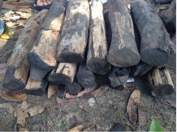 Cây gỗ mun thuộc họ thị và thường có màu đen như mực