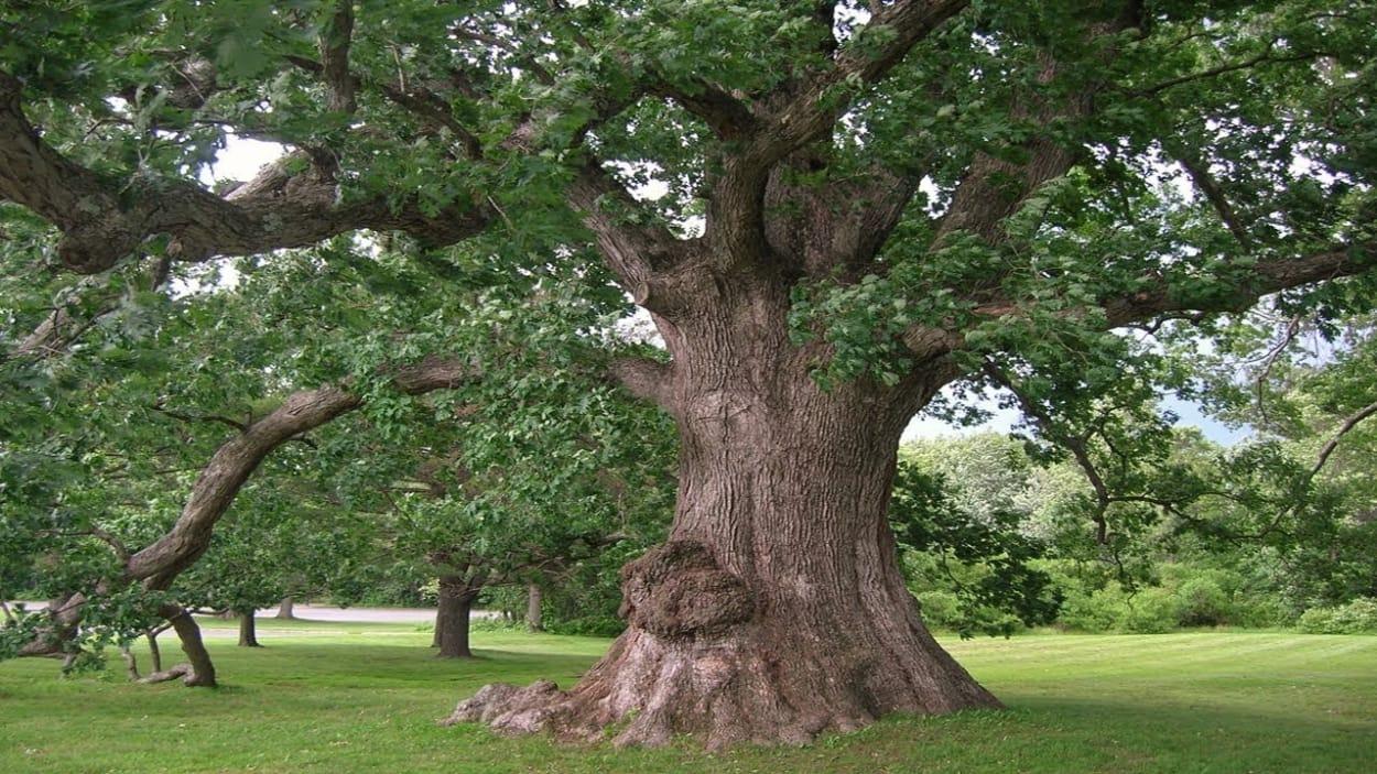 hình ảnh cây gỗ lâu năm