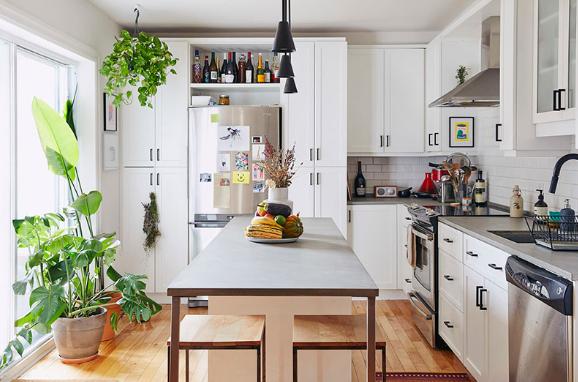 cây phong thủy trồng trong phòng bếp