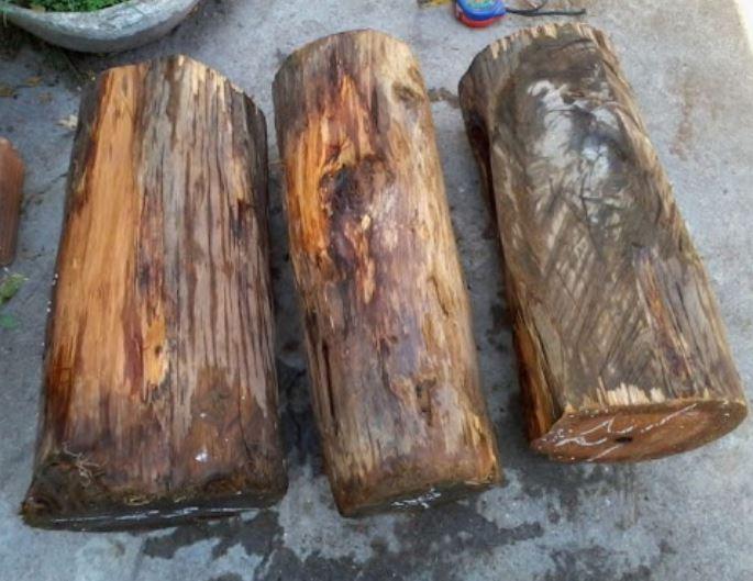 Đoạn ngắn cây gỗ trắc