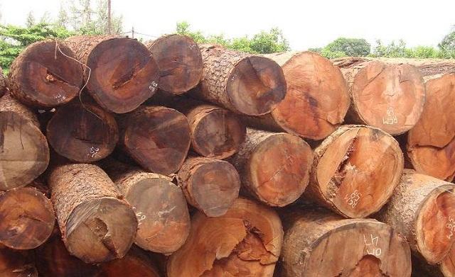 gỗ gõ đỏ