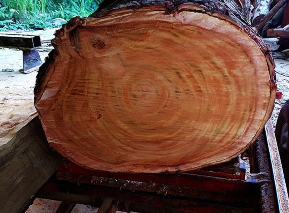 Vân gỗ gụ Lào