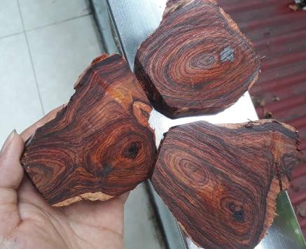 gỗ sưa