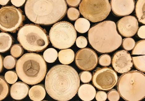 Giá gỗ téch