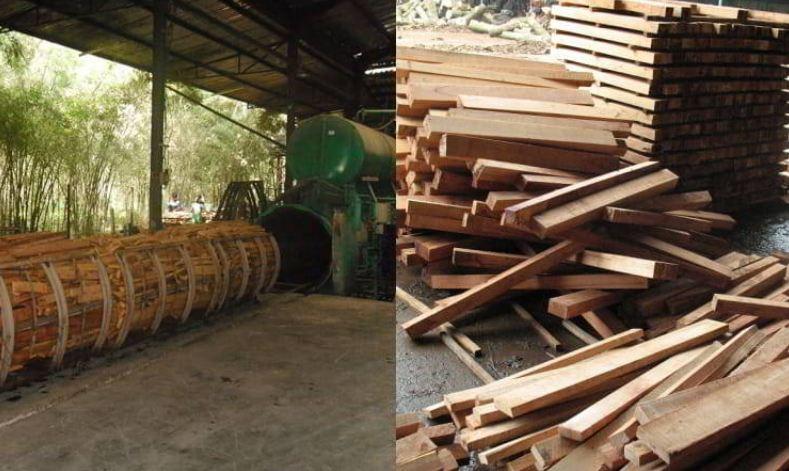 Gỗ cao su được sử dụng để lấy mủ và lấy gỗ để sẩn xuất đồ nội thất