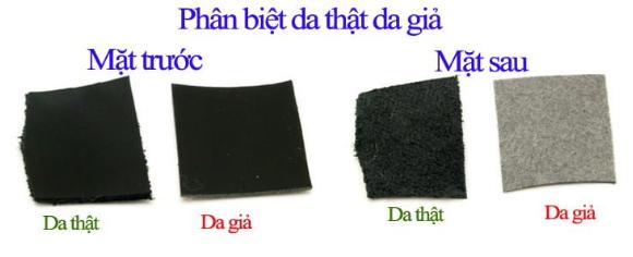 Quan sát mặt trước và sau của da
