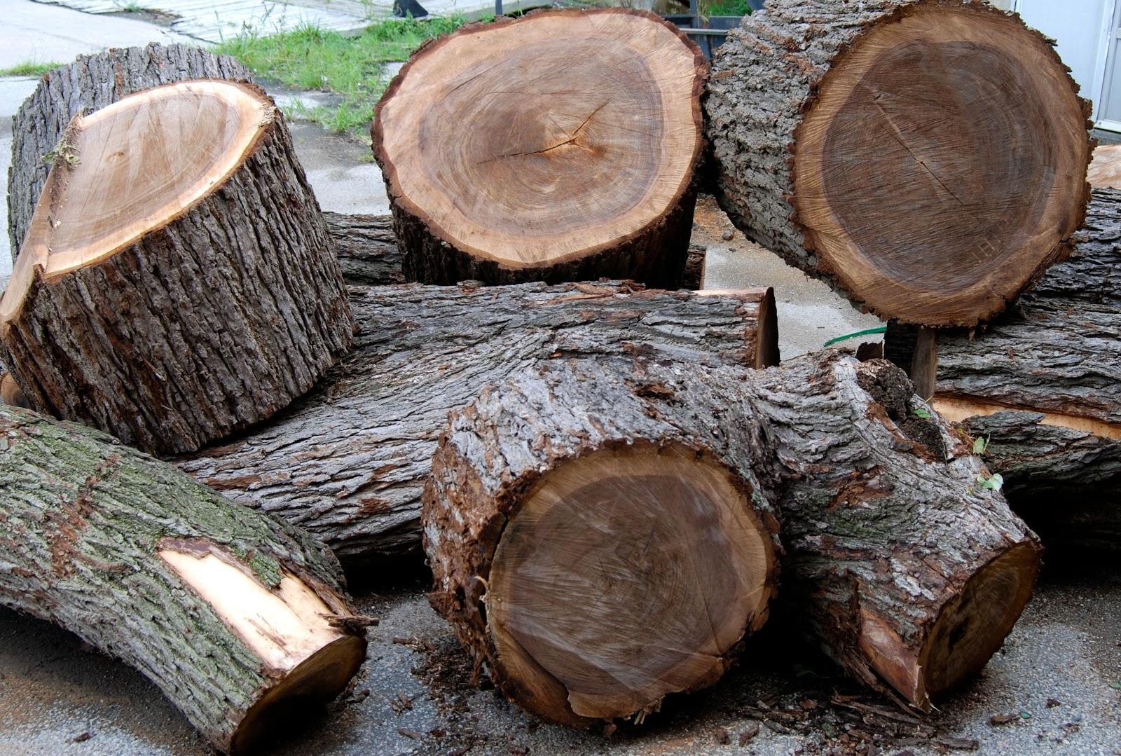 Sự khác màu giữa các phần của cây gỗ óc chó
