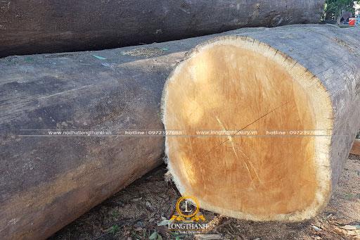 Thân gỗ Gõ đỏ tự nhiên