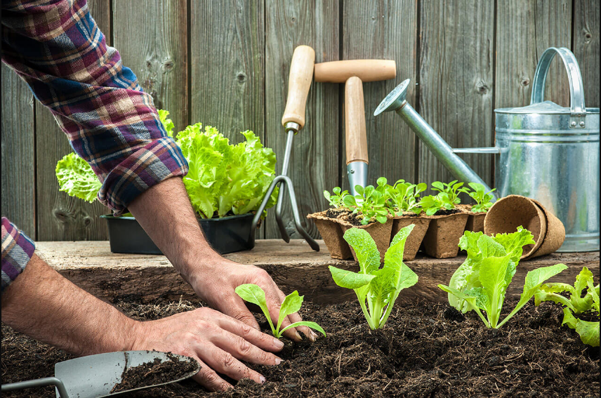 Gieo trồng một mảnh vườn, tạo mảng xanh cho không gian sống