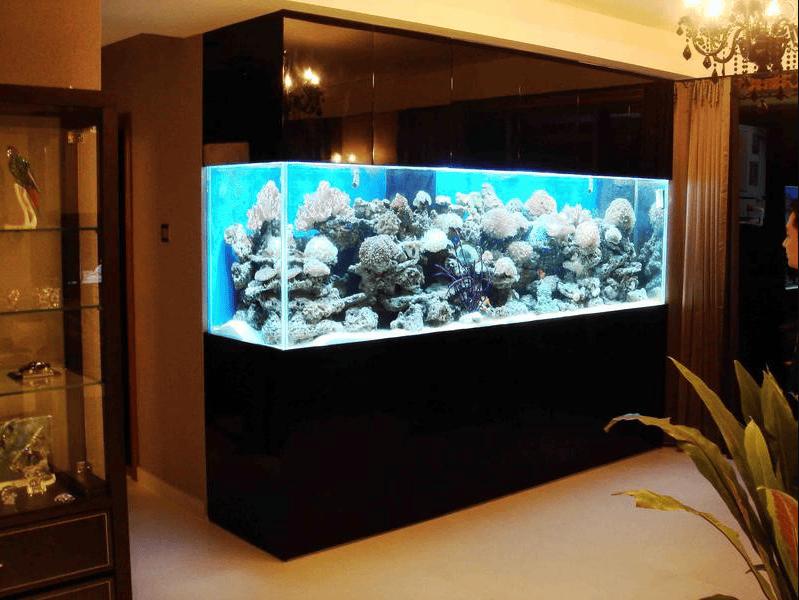 ý nghĩa tốt lành của bể cá cảnh trong nhà